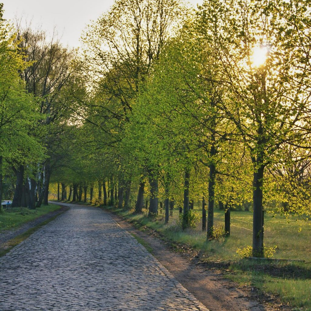 cobble stone road near Luebtheen, Germany