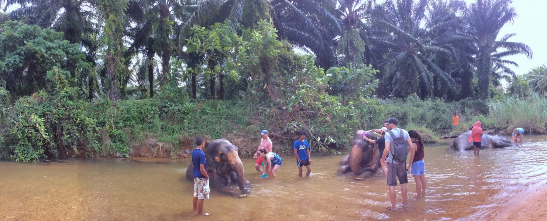 Elephants bathing in a river, being washed by tourists in Thailand