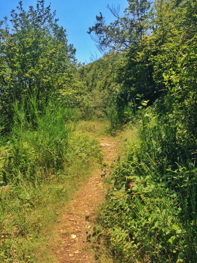 hiking in Catalonia: high weeds on the Roc Perer trail