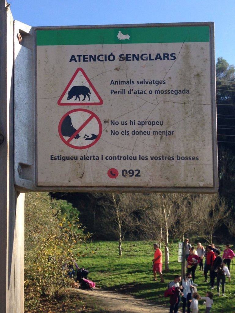 wild boar warning near Vallvidrera Reservoir