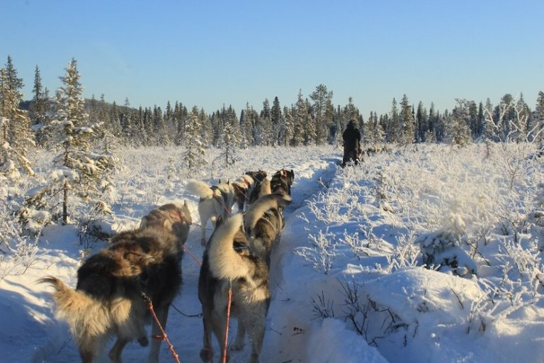 dog sledding_things to do in Sweden outdoors